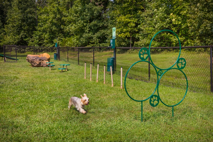 arbors at broadlands fenced in dog park with dog playing in agility course - jefferson apartment group